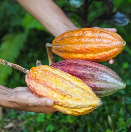 cacao-le-lautrec