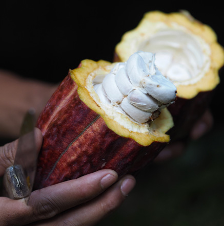 cocoa-le-lautrec