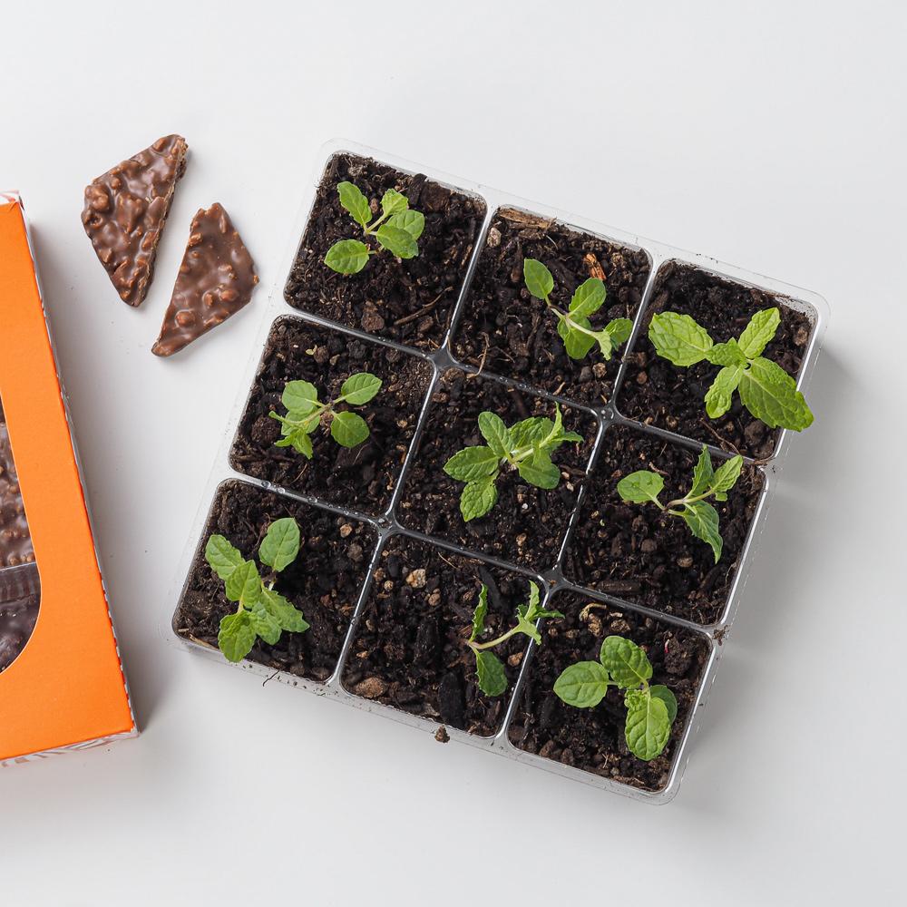 Marcos et plantes aromatiques